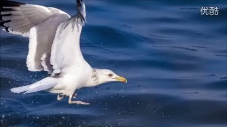 海鸥视频短片