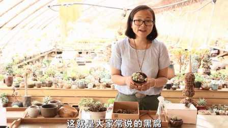 美女专家提示:多肉植物这样养护才不会!