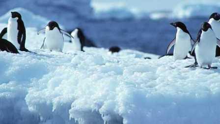 『Imax Full Hd』南极洲:不同的冒险经典国语 特别放送