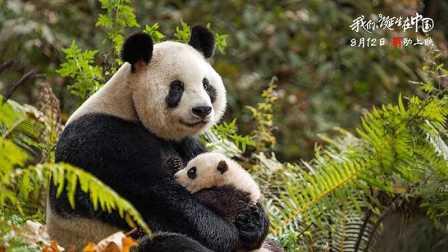 动物也有感人故事《我们诞生在中国》中文版新预告