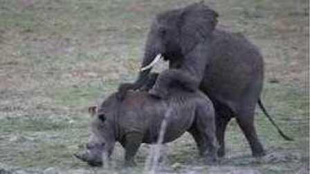 巨型动物PK,大象干犀牛,干河马,干野牛