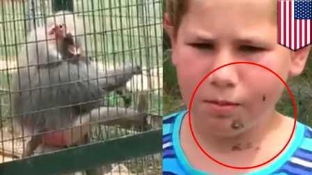 【冯导】悲剧的小女孩被发疯的猴子扔一脸狗屎