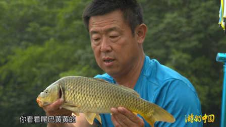 《游钓中国》第二季第14集 自贡寻鲤