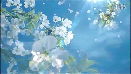 梨花雨视频素材
