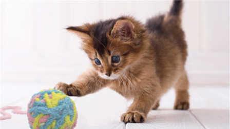 猫咪这下可高兴坏了 那么多小球 都是自己的 1