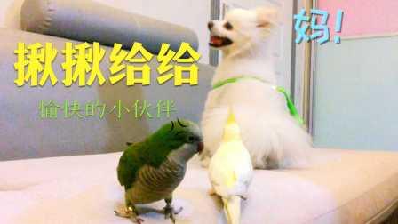 小鹦鹉与狗狗的萌萌日常