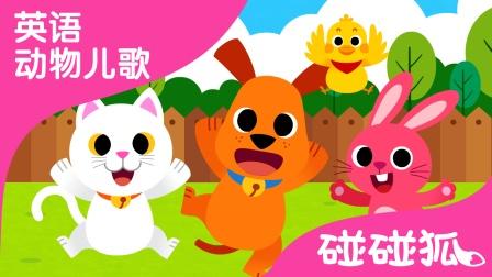 Baby Animals | 英语动物儿歌 | 碰碰狐!英语动物儿歌