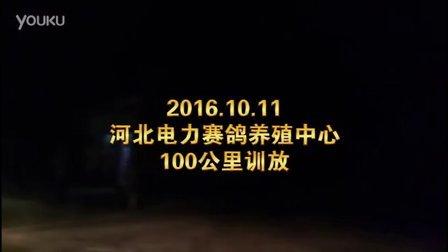2016.10.11河北电力赛鸽养殖中心100公里训放
