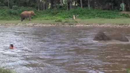 暖新闻-小象毫不犹豫救助溺水青年