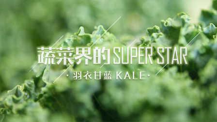 蔬菜界的super star,羽衣甘蓝——凯撒沙拉、健康果昔