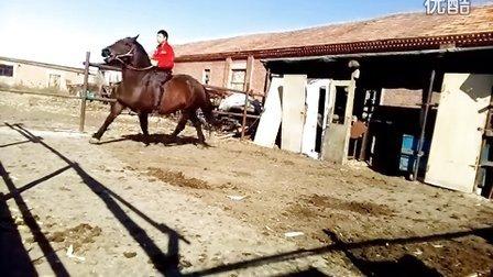 骑驯马004