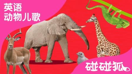 ABC Animal Train | 英语动物儿歌 | 碰碰狐!英语动物儿歌