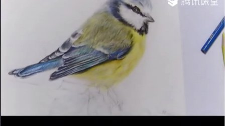 【艺达】彩铅画小鸟毛发的处理—上