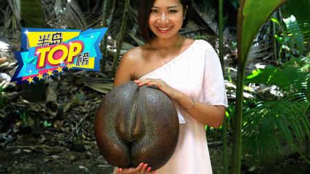 一个20多斤重,世界上最大的种子犹如女性盆骨!【半岛TOP榜】