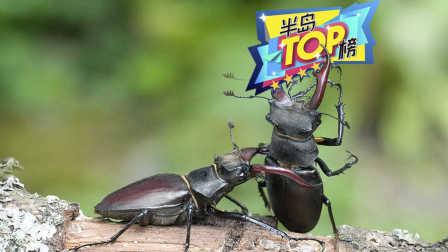 世界上最贵的甲虫 竟高达89000美元!!!