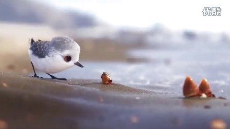 奥斯卡最佳动画短片——鹬