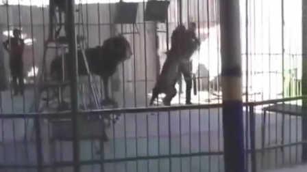 实拍埃及一马戏团表演时出意外 狮子扑驯兽师