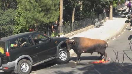 西班牙蛮牛发作狂顶汽车 轮胎刺穿车身顶烂