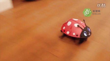 机智网Video:Kamigami瓢虫