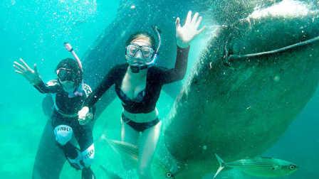 在体型巨大的鲸鲨身旁浮潜 张开的大嘴可以将人整个吞下去 09