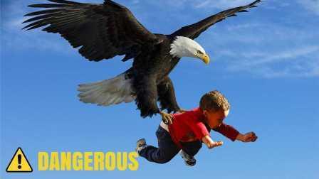 巨鹰抓起小孩起飞,幸好家长在场