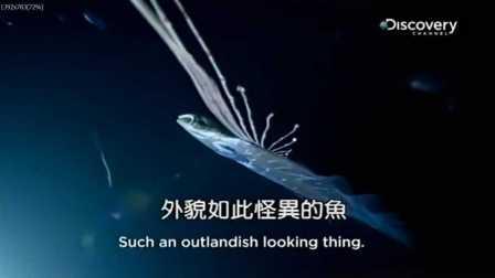 《河中巨怪》第八季第1集中文版:海蛇神话(Deep Sea Demon)