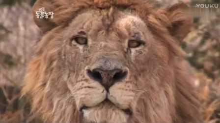 狮虎园之狮虎斗