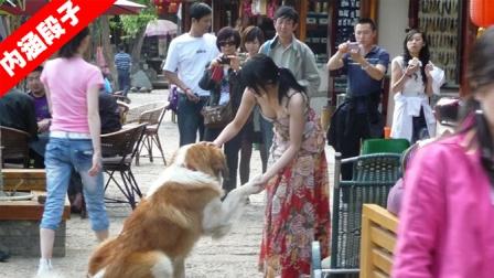 内涵段子02期:狗为啥害怕女孩提塑料袋?