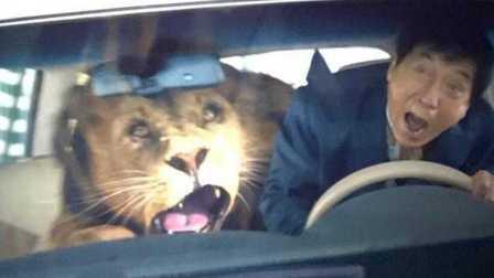 《功夫瑜伽》迪拜公主宠物狮子与成龙飙完车直接吐了