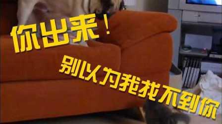 汪星人与小奶猫与沙发的爱恨情仇 Superviral TV