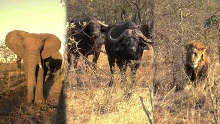 獵奇 第一百二十四集  探秘非洲野生动物学院