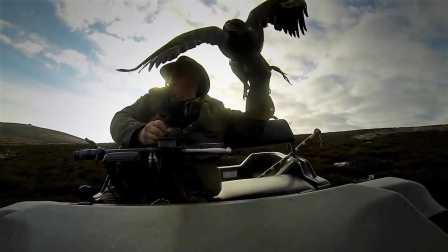 鹰的视角—苏格兰荒原上的猎鹰