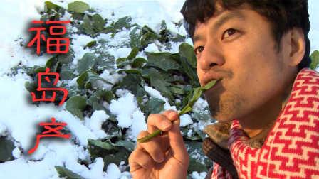 亲口试验 日本福岛县的东西到底能不能吃 10