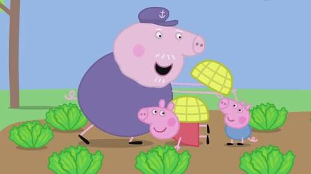 小猪佩奇第4季 花园种菜