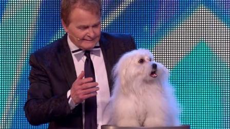 英国达人秀Marc Métral和他会说话的狗狗Wendy的表演