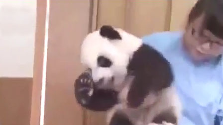 熊猫被饲养员无情掸灰 熊猫:难道我不要面子的吗 ?