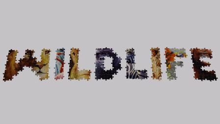 长见识!世界上最大的拼图动画