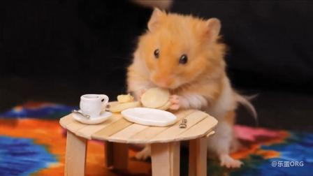 给萌死人的小小仓鼠做的小小生活用品