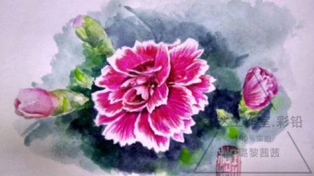 彩铅入门教程—康乃馨