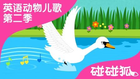 Swan | 英语动物儿歌 第二季 15 |  碰碰狐! 动物儿歌