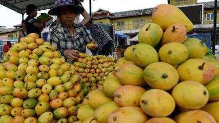 芒果怎么吃视频 芒果的功效与作用及禁忌 芒果店长 卖水果摆摊视频