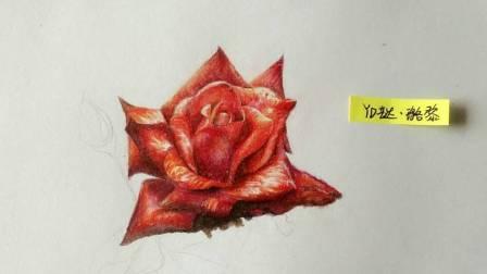 彩铅超写实 ——玫瑰花