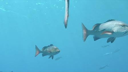 当姑娘遇见大堡礁 要美丽也要环保 37