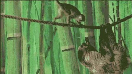 树懒食物被小猴子抢走 反击动作简直萌化人心 09