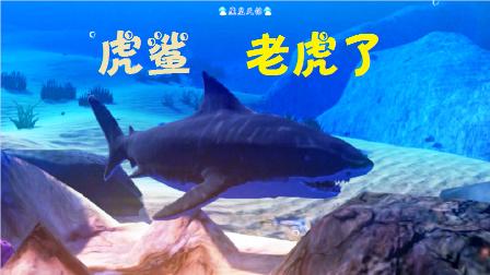 天铭 模拟鱼 海底大猎杀 Feed and Grow Fish 17 虎虎虎,虎鲨!