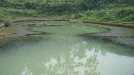 """震撼!庆秀山神秘""""死湖""""一夜之间惊现上万条蛇"""
