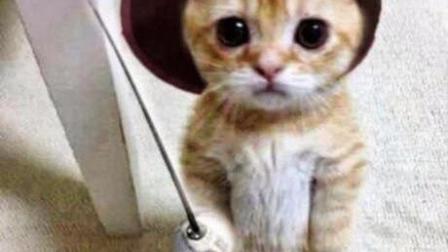 搞笑可爱的猫咪分享给大家