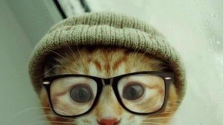 搞笑好有爱的猫咪们