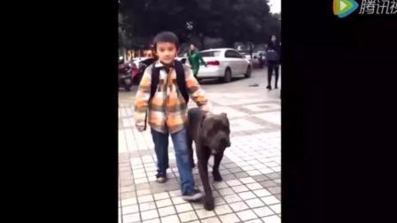 小主人拉着狗狗一起出来约打架, 我看谁敢动你一下!