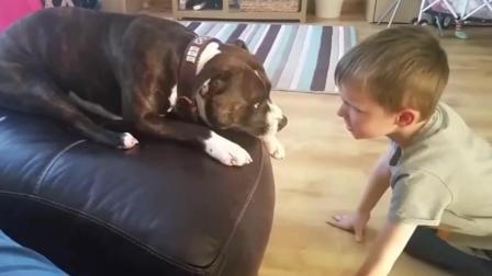 这些狗要逆天啊, 把这些小baby撩的是五迷三道的, 爱逗娃的狗狗